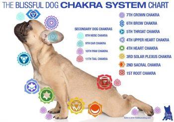 Cura de Chakras nos Animais [Como Funciona]